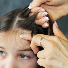 Pictures how do you treat and prevent head lice - Can Black People Get Lice Myth Or Fact H Amp S